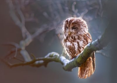 owl-1834152_1280